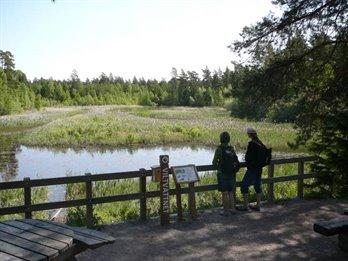 Två personer står vid ett staket av trä och tittar ut över en våtmark med öppet vatten och vass. Intill står en stolpe med texten Viltvattnet och en informationsskylt.