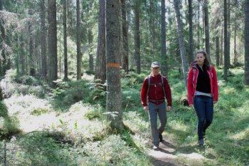 En man och en kvinna går på en stig genom barrskog. På ett träd är det målat en orange ring runt stammen.